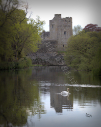 Cahir Castle with swan